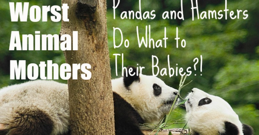 Worst Animal Mothers