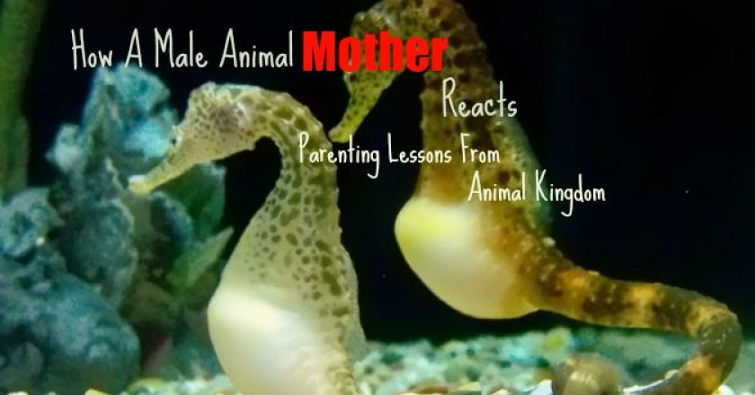 Male-animal-mother