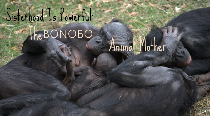bonobo animal mother