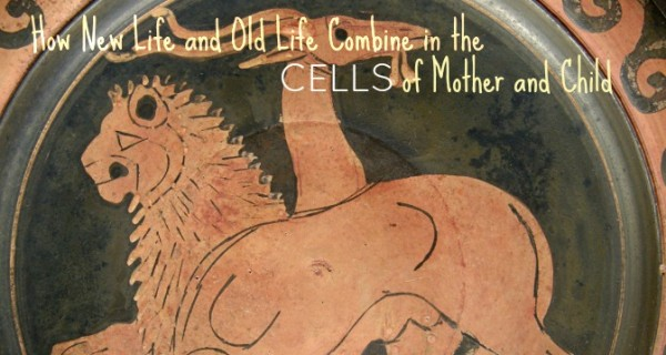 cells of mother and child